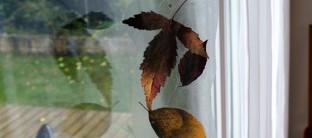 Blätterfensterbild