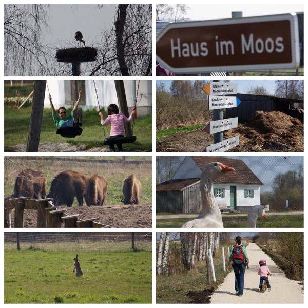 Haus im Moos