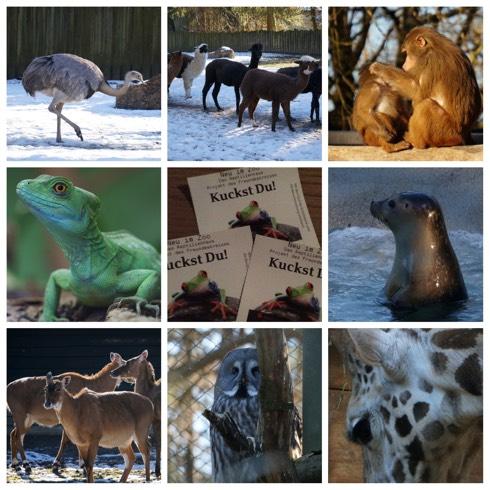 Winterbesuch im Zoo